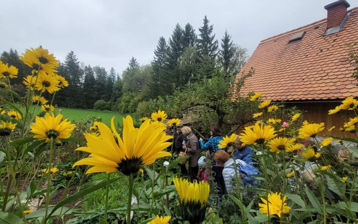 Wahre Schätze direkt vor der Haustür: Faszinierende Kneipp-Kräuterwanderung in Trofaiach